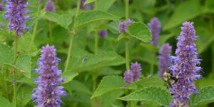 Native Plants Host